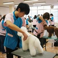 九州サンシャイングルーミングスクール 熊本校